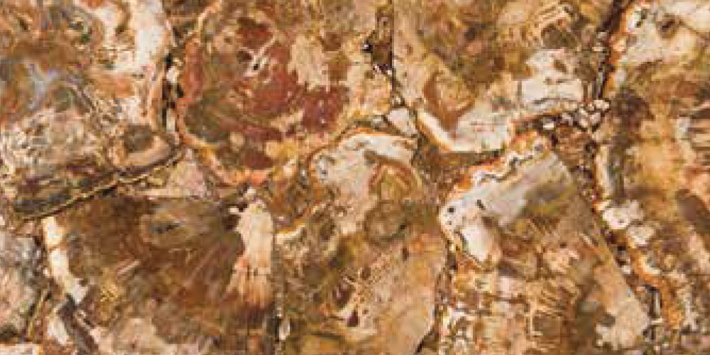 Petrified Brown Random